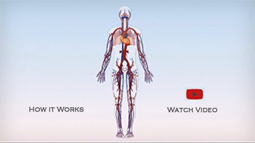 cardiovascular-system_web